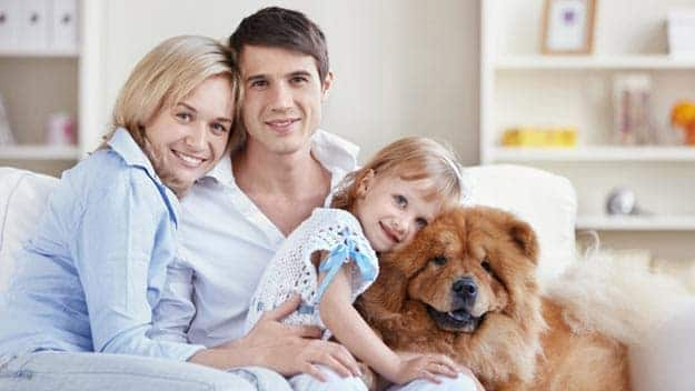 Wills & Trusts dog-young-family Direct Wills Sedgley Park